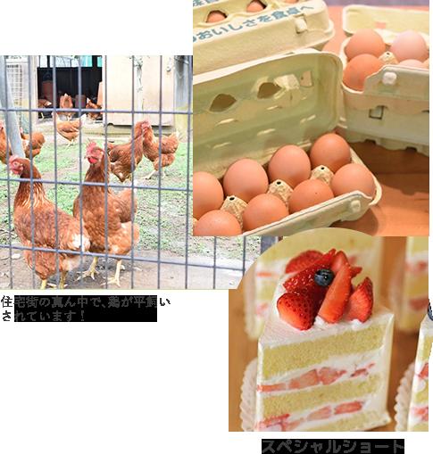 平飼い卵 スペシャルショート